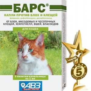 bars_kapli_insect_cat_tg