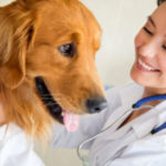 The Government approved the draft Law on Veterinary Medicines.